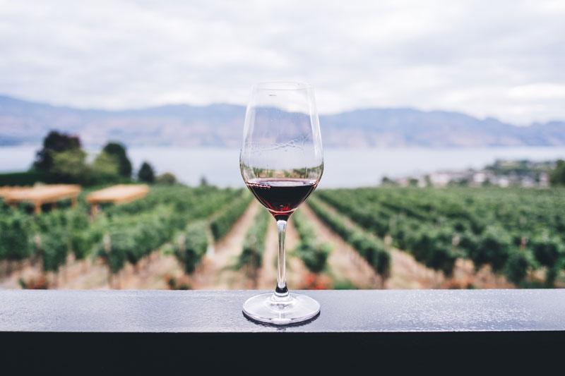 Cómo escoger un buen vino