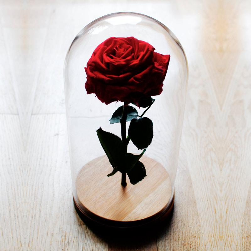 Rosa seca preservada