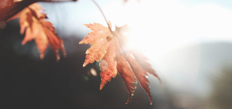 Zapatos de otoño
