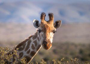Los mejores destinos para irte de luna de miel, como a África