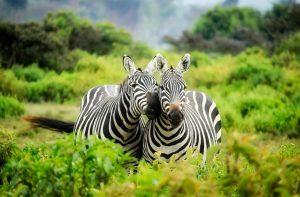 Los mejores destinos para irte de luna de miel, como a un safari