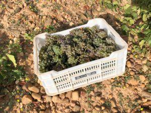Caja con uva vendimia Belondrade