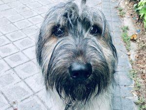 Diario de cuarentena perros
