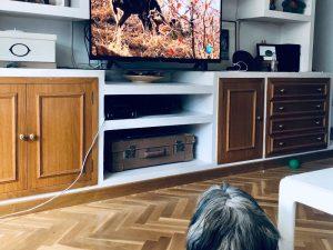 Diario de cuarentena, viendo televisión